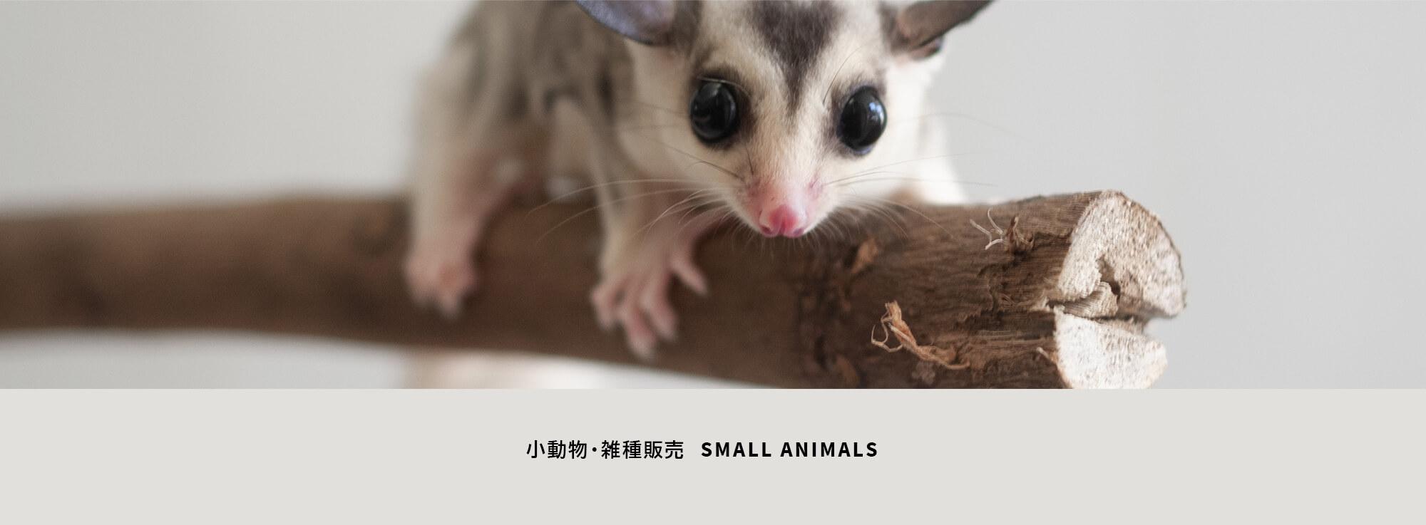 小動物・雑種販売