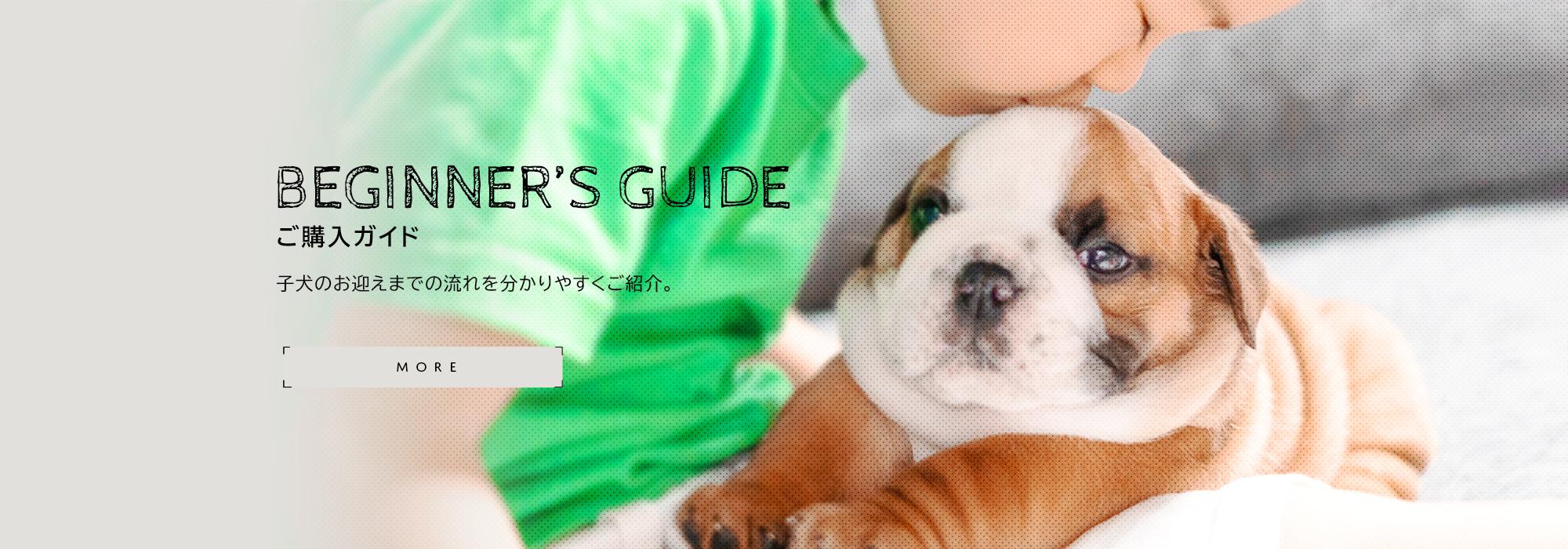 ご購入ガイド 子犬のお迎えまでの流れを分かりやすくご紹介。